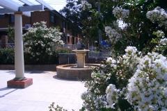 front-courtyard-gardens